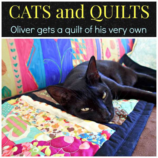 Cat and quilts. Three-legged cat gets a quilt of his own. So sweet!