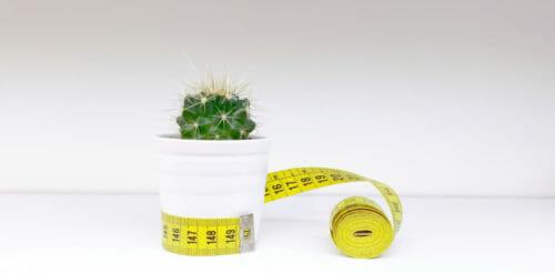 cactus sewing patterns